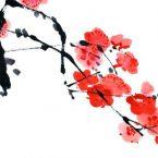 Il simbolismo dei mandala